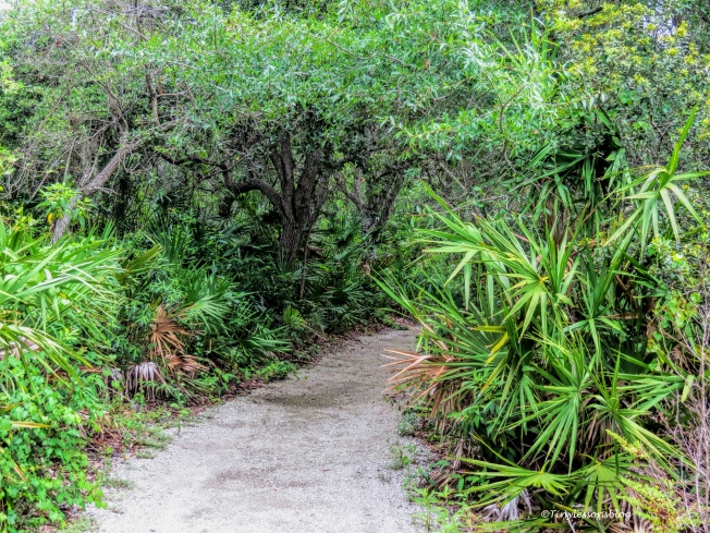 mcCough nature parl trail ud70